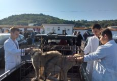 Учешће наше школе на изложби украсних животиња у Јагодини
